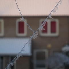Frosty Spider Silk (HoodedOne) Tags: winter snow macro netherlands dutch spider frost sneeuw nederland oisterwijk spidersilk canons95