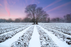 Lavender in Winter (Tired but Willin) Tags: morning winter sky mist snow ice sunrise landscape co
