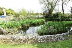 DSC_1181 Calcot (PeaTJay) Tags: flowers trees plants macro nature water gardens fauna outdoors reading flora lakes parks micro closeups ponds berkshire bushes calcot tilehurst nikond750