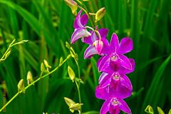 Singapore (Edi Bhler) Tags: plant flower pflanze blumen 28300mmf3556 nikond800