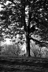 XT1-04-31-15-272-2 (a.cadore) Tags: nyc newyorkcity blackandwhite bw zeiss landscape centralpark candid uptown fujifilm uws carlzeiss xt1 biogont2828 zeissbiogon28mmf28 fujifilmxt1