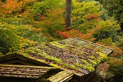autumn colors in Arashiyama, Kyoto #6 (Takashi K. A) Tags: autumn trees mountain fall colors leaves japan river season temple maple kyoto arashiyama