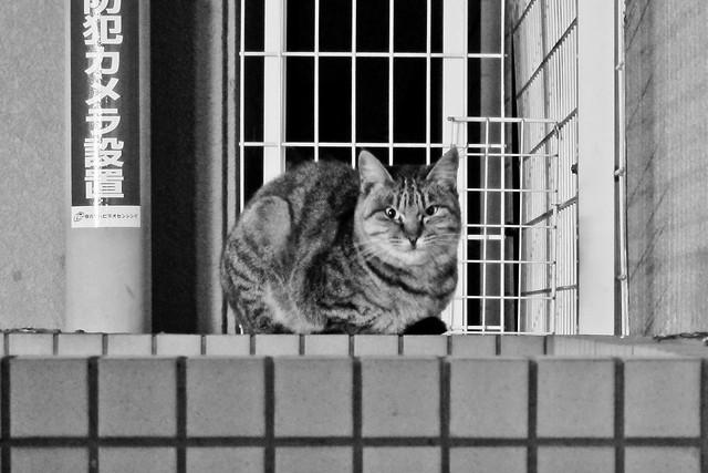 Today's Cat@2011-12-01