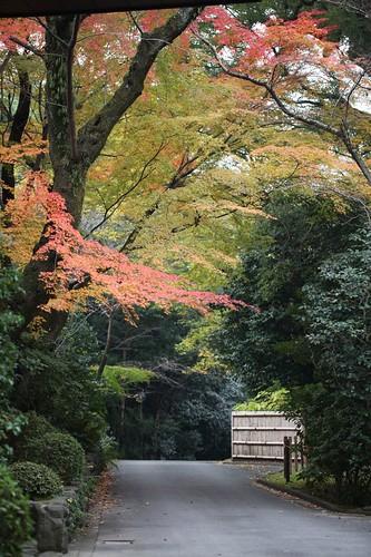 秋の風景 / Autumn scenery
