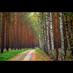 wald (~janne) Tags: forest 50mm f14 olympus environment wald wetzlar umwelt leitz janusz manuell summiluxr e520 ziob