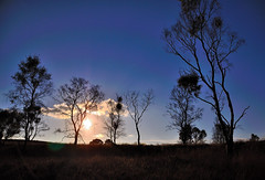 Match Stick Trees. By R J Watson (Explored) (Ray~Watson) Tags: uk blue trees sunset sky sun sunlight field evening nikon october exposure shadows dusk tamron staffordshire sillouhette 2011 d7000