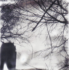 winter is here (Ben Wolfarth) Tags: camera old trees winter sky bw test white black tree film monochrome up leaves contrast liverpool vintage silver project garden polaroid sx70 one 1 lomo model cathedral no uv lofi blues retro spooky shade twig land instant 100 analogue alpha anglican impossible px px100 lomograpghy