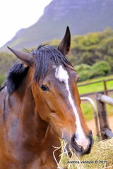 _RAC4934 (andreavallejos) Tags: morning horses dogs rain breakfast ponies foodtime