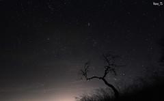Tu, estrella!!! (Mariano_V) Tags: tree night arbol star long exposure nocturna exposicion larga strella