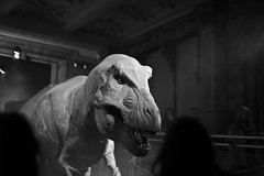 Tyrannosaur (The_Kevster) Tags: leica blackandwhite bw london monochrome tongue museum model dinosaur teeth rangefinder exhibit jaws naturalhistorymuseum animatronic trex tyrannosaurusrex southkensington tyrannosaur sw7 summicron50mm theropod leicam9