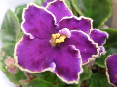 De ensueo (0_Detalles_0) Tags: color flor texturas profundo suaves