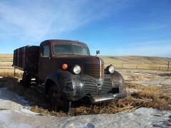 1939 Dodge truck (dave_7) Tags: old classic truck rust rusty dodge 1939 farmtruck graintruck