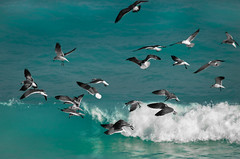 Happy New Year !!! (hvreflections) Tags: ocean sea naturaleza seagulls color beach latinamerica beauty birds mxico wonder hope mar nikon raw turquoise bigma flight sigma wave happiness playa aves felicidad gaviotas cancn esperanza ola belleza happynewyear marcaribe vuelo quintanaroo amricalatina maravilla caribbeansea ocano sigma50500 turquesa nikond2x felizaonuevo playadelfines newyear2012 aonuevo2012