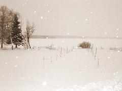 snowing Lapland