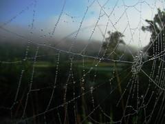 Hazard (thetrick113) Tags: trees golf spider web spiderweb dewdrop dew gofcourse blinkagain