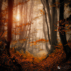 enchanted path (ildikoneer) Tags: 100commentgroup micarttttworldphotographyawards micartttt michaelchee