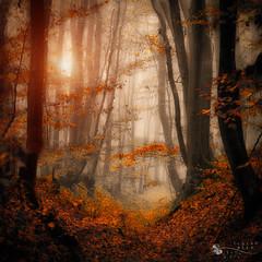 enchanted path (ildikoneer) Tags: 100commentgroup micarttttworldphotographyawards micartttt michaelchee