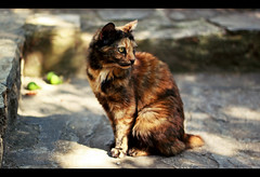 """Be on the watch. (Graldine  Hofmaier) Tags: light summer pet rock stone cat warm fig bokeh kitty ground heat supernova geraldine kittycat cutekitty lightdots lightdot geraldinesupernova hofmaier geraldinehofmaier"