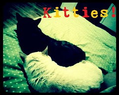 "kitties • <a style=""font-size:0.8em;"" href=""http://www.flickr.com/photos/73968363@N02/6676919297/"" target=""_blank"">View on Flickr</a>"