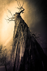 Nightmare - Split Tone (Explored) (Kevin Rodde) Tags: tree canon il nightmare elgin splittone 500d rodde twistedwood t1i bluffhillcemetary kevinrodde