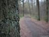 Waldweg 14.01.2012