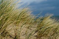 Curracloe grass (Daniel & Sonja) Tags: ireland beach grass 50mm nikon co marram curracloe wexfor d7000