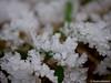 Eiskristalle auf Gras 1 / 18.01.2012