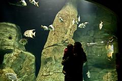 IMG_9171 (mert alp ztrk) Tags: ocean life sea fish nature water silhouette coral kids children wonder zoo aquarium shark amazing natural under cities twin istanbul trail tropical reef tropics bule tang atlantik arapaima akvaryum florya balk tropik istanbulaquarium istanbulakvaryum svey istabulakvaryum