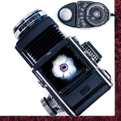 Rolleiflex SL66 (christian.senger) Tags: camera light red white flower rollei digital rolleiflex mediumformat germany lens geotagged nikon europe dof flash explore indoors sl66 lightmeter bellows ulm lightroom d300 sekonic strobist christian_senger:year=2012