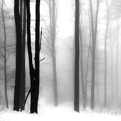 (Balzs Papdi) Tags: winter blackandwhite snow tree monochrome weather fog forest hungary mood beech fa bkk magyarorszg kd h tl erd feketefehr brzsny hangulat idjrs monokrm brzsnymountains