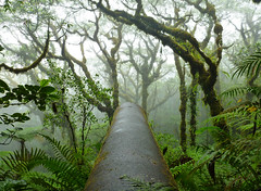 World War II Relic, Pohnpei, Micronesia (ebuechley) Tags: scenery wildlife fsm micronesia pohnpei