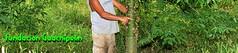 Ceiba (Fundacion Guachipelin) Tags: naturaleza pez caballo costarica peces selva huevos morpho passiflora araa abeja rana puesta bamb mariposa tilapia armadillo cristal catarata colmena murcilago ala