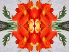 La naturaleza es un misterio (NA  TA  Li) Tags: flowers orange flower fantastic flor natura psychedelic naranja psy