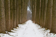 Snow in a wall of trees (Roland B43) Tags: trees winter snow landscape rememberthatmomentlevel1 magicmomentsinyourlifelevel1 rememberthatmomentlevel2 rememberthatmomentlevel3