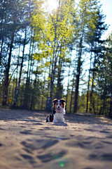 DSC_1715T (juliannahiaasen) Tags: portrait dog pet dogs animal training photography bordercollie australianshepherd dogphotography dogtraining dogportrait dogphotographer