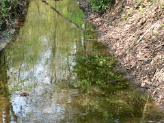 water in the forest (achatphoenix) Tags: water forest woods eau wasser ostfriesland fort eastfrisia
