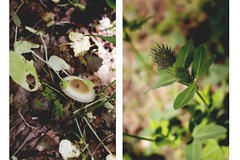 nature&stuff (ConcreteLies) Tags: brown green nature mushroom grass weeds diptych thistle