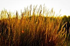 Playa. Punta del Moral. Ayamonte (Huelva) (Angela Garcia C) Tags: vegetacin huelva turismo geografafsica puntadelmoral ayamonte