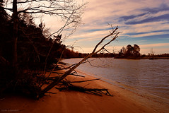 maurice river bluffs (tom bourdot) Tags: trees sky cloud tree texture beach nature water clouds rural river landscape outside mirror ruins dusk hiking walk branches may nj gimp shore wetlands bluffs nikkor tangle magichour mauriceriver mauriceriverbluffs nikond5300