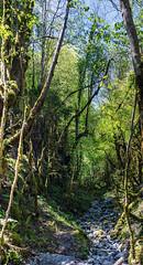 Sortir (Collabois) Tags: nikon cairn chemin mousse pyrnes fes fougres d600 randonnes baronnies dryades gourguedasque