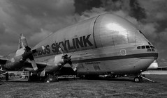 Super-sized (crusader752) Tags: bw monochrome mono blackwhite transport boeing preserved guppy turbine turboprop outsize superguppy bruntingthorpe stratocruiser b377 aerospacelines airbusskylink fbtgv1 b377sgt
