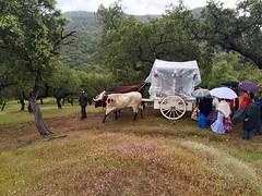Camino Romera Las Virtudes (AVazquez_Repi) Tags: naturaleza camino huelva fiestas paisaje nava romeria virtudes repilado