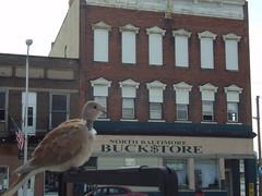 Creepy Neck Bird. North Baltimore, Ohio (mootis99) Tags: bird featherless