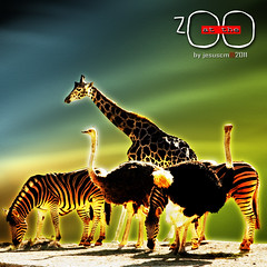 at the zoo (jesuscm) Tags: color colour animals zoo nikon giraffes species zoolgico animales ostriches zebras jirafas cebras especies avestruces jesuscm magicunicornverybest