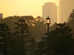 Twilight inTokyo (mkdphotos) Tags: street light urban lamp yellow twilight asia streetlamp lamppost