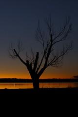 Daybreak (mclcbooks) Tags: morning sky tree sunrise landscape dawn colorado daybreak firstlight chatfieldlake