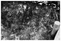 The glassy surface of water (Delytayan Third) Tags: bw japan  yokohama kanagawa