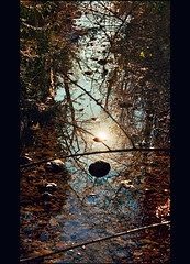 Stare with me in the stream (Katarina 2353) Tags: light reflection film me nature photography austria sterreich nikon stream shadows with image stare stwolfgang katarinastefanovic katarina2353