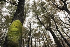 Forest Spirits (tigrić) Tags: trees patagonia nature ecology argentina smile forest spirit motherearth lagodeldesierto photographyforrecreationeliteclub elchelten