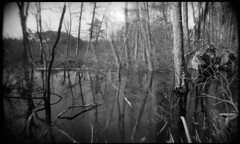 Parker Swamp #3 (LowerDarnley) Tags: trees ma holga andover swamp 120n holgarama parkerstateforest